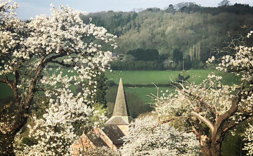 Cherry blossom and Coreley church